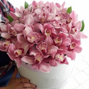 31 крупная орхидея в коробке R782